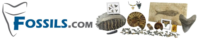 Fossils.com